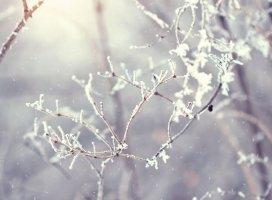 手紙 〜冬〜|双葉 みかさんの日誌写真