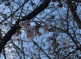 桜 あや^−^さんの日誌写真