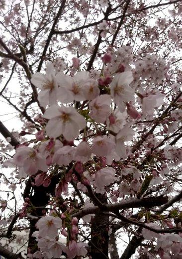 お天気(^_^;)|ナミ☆。さんの日誌写真