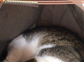 猫になりたいな|アカネ゜.+:さんの日誌写真