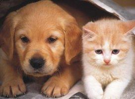 犬派とネコ派|ApplePie69 さんの日誌写真