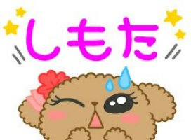 こんにちは(^▽^)|よつば///*さんの日誌写真