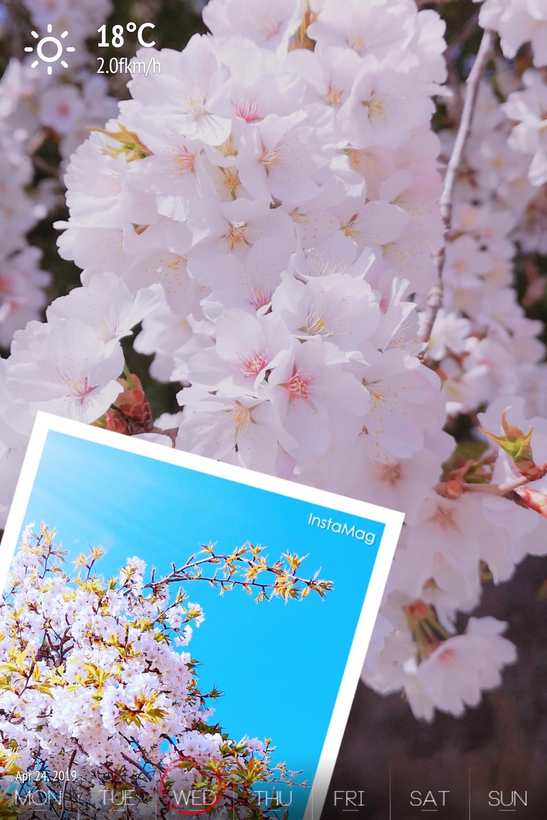 人妻さん日誌:<br /> 日本の花と言えばサ