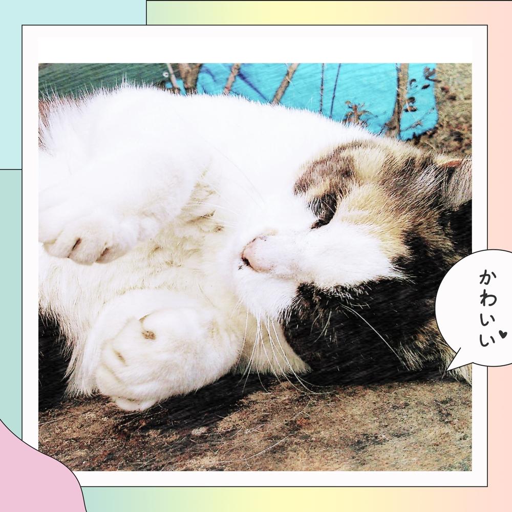 人妻さん日誌:<br /> <br /> 三毛猫ミーちゃん