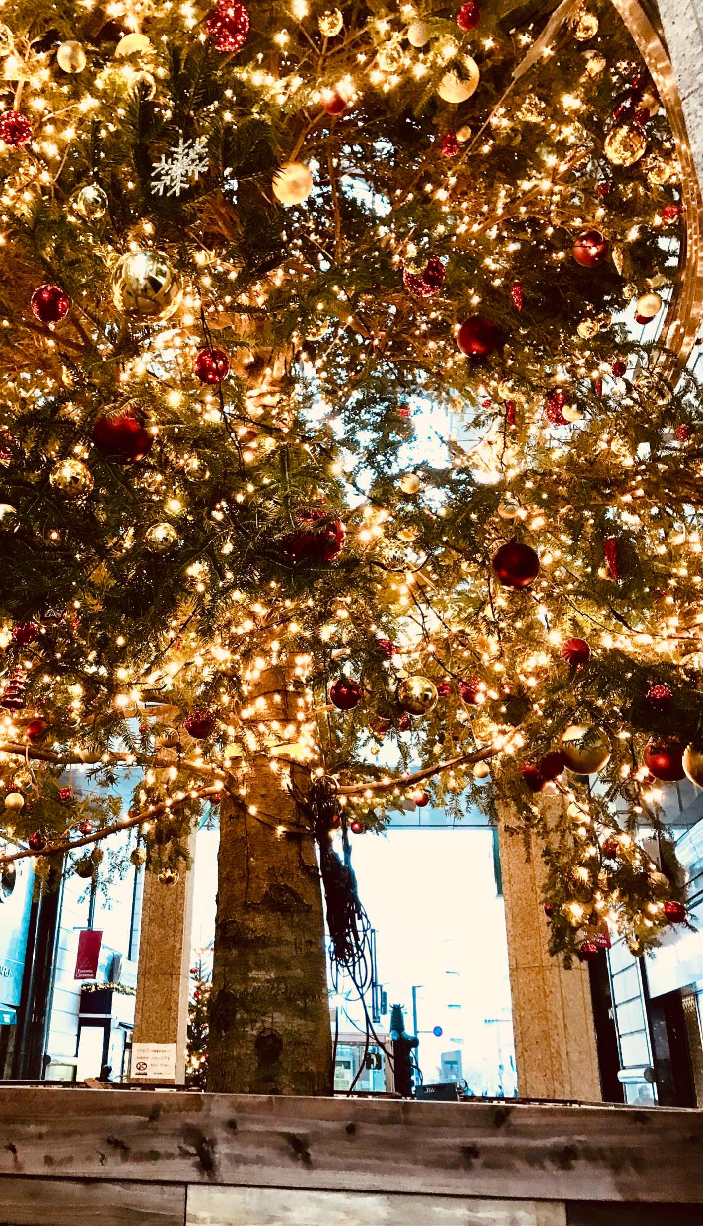 人妻さん日誌:クリスマスですね