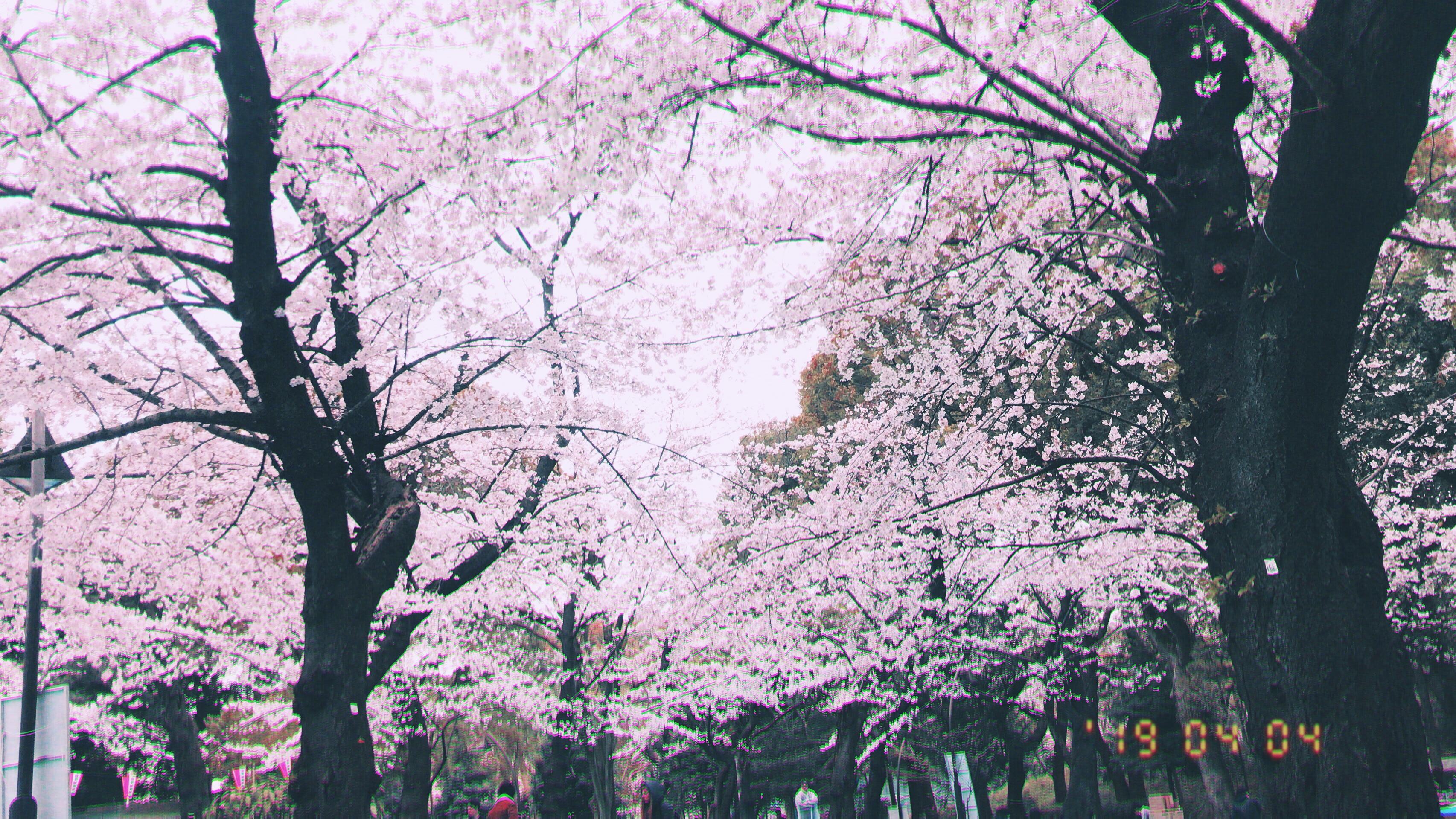 人妻さん日誌:陽春の候、皆さまいか