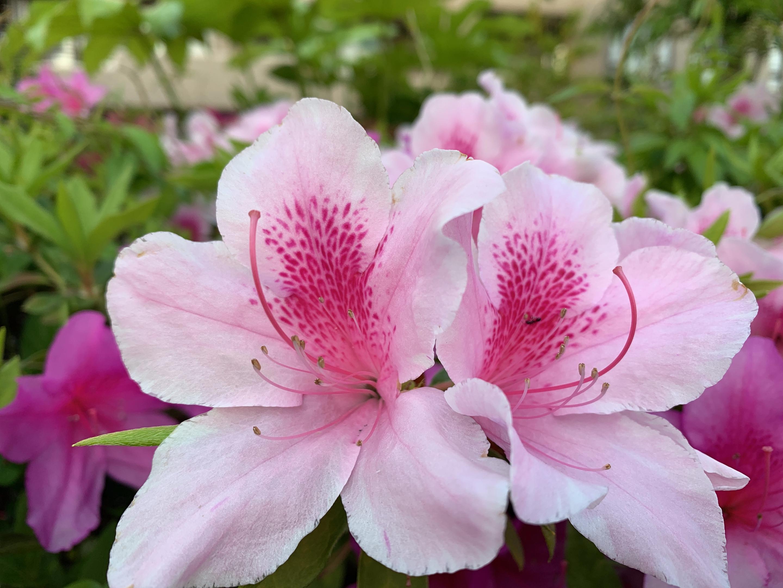 人妻さん日誌:お花が大好きです<br /> い