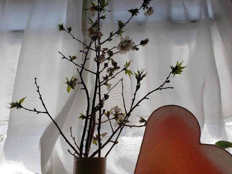 人妻さん日誌:お花屋さんで見つけま